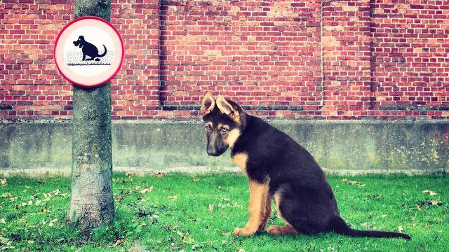 dog-no-pooping-sign