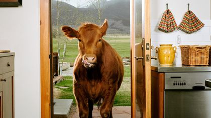 9 Cool Housewarming Traditions From Around the World—From Cow Guests to 'Haint' Blue