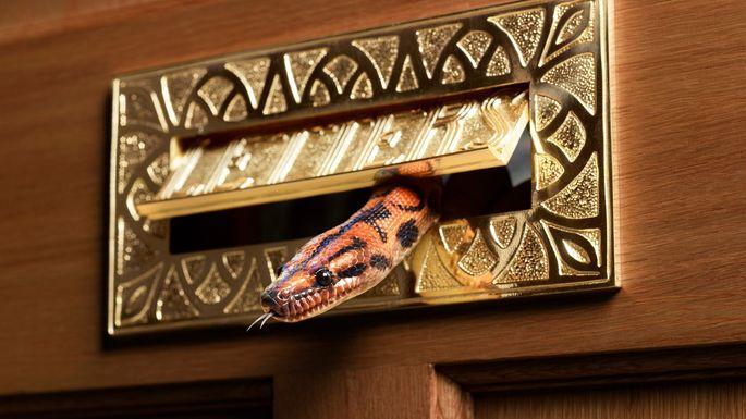 snake entering through mail slot