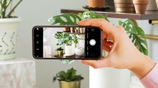 Grow It for the 'Gram: These Are the 5 Most Photoworthy Houseplants on Instagram