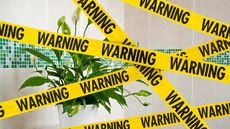 8 Houseplants That Could Kill You and Your Pets