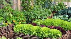 DIY Herb Garden: How to Grow Herbs in 6 Simple Steps
