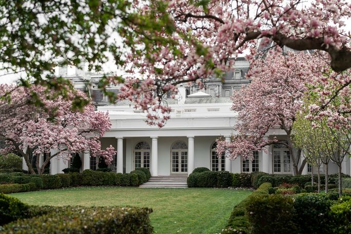 Crabapple trees in bloom in the Rose Garden of the White House in March