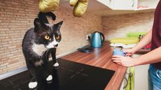 7 Things in Your Kitchen That Are Grossing Out Potential Buyers