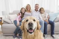 How to Pet-Proof Your Home So It Doesn't Look Like It's Gone to the Dogs