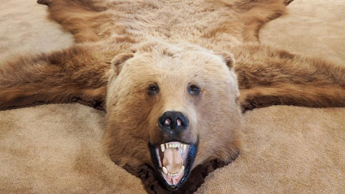 bearskin-rug