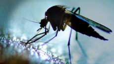 Tricks to Kick Bugs (and Zika) Out of Your Yard