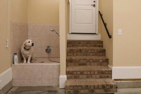 With tubs and shower heads adjusted to the height of dogs, washing stations make cleaning your dogs at home easier.