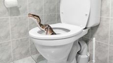 Snakes in the Toilet? Welcome to the New Homeowner's Nightmare