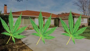 I Accidentally Bought a Marijuana Grow House: Why Even Weed Lovers Should Be Very Afraid