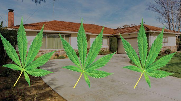 Marijuana-Grow-House