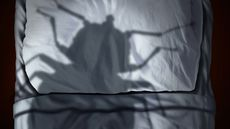 How to Get Rid of Bedbugs: DIY Eradication, and When to Call an Exterminator