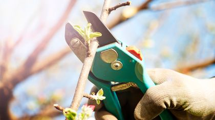 Pruning Your Trees Can Save You Cash—Here's How