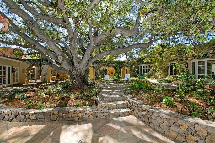 200-year-old oak tree