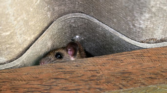 How to Get Rid of Mice for Good | realtor.com®