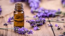 6 Ways To Freshen Up Your Home With Lavender Essential Oil