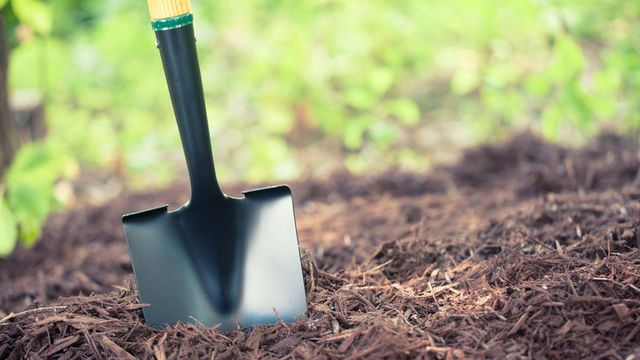 A Green Thumb's Guide to Mulching a Garden the Right Way