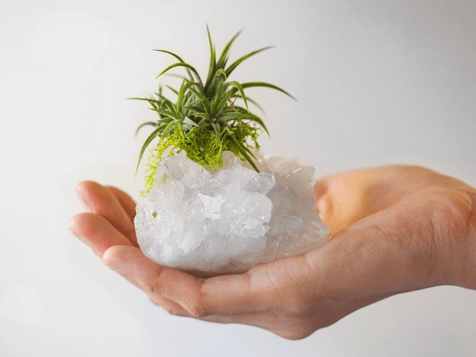 Fill your favorite crystal with a low-maintenance air plant.