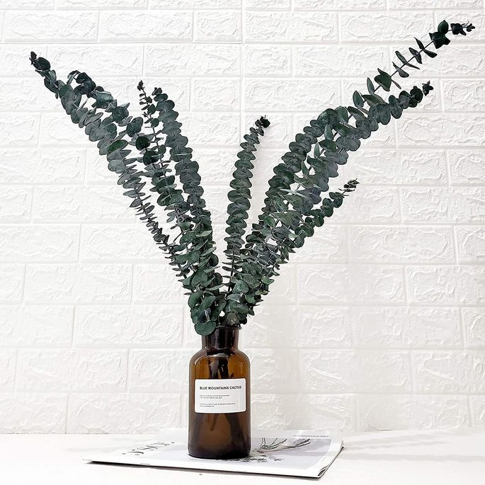 The Best Plant For A Bathroom Bedroom And Every Area In Your Home Realtor Com