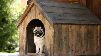 Dig Through Our Listings for Doggie Dream Palaces… and More!