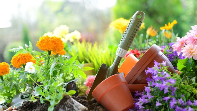 5 Summer Flower Growing Tips These Blooms Can Take The Heat Realtor Com