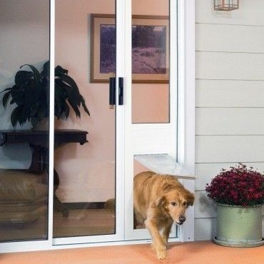 The Best Dog Door For Your Pet Do You Have The Right One Realtor