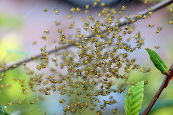 Millions of Spiders Take Over Town in Tennessee