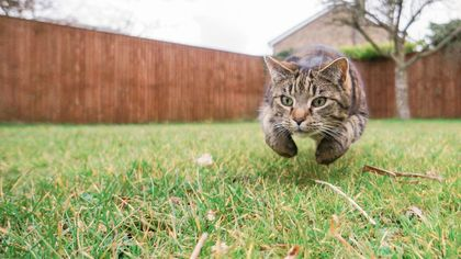 How to Keep Cats Out of Your Yard, Sandbox, and Other Favorite Haunts