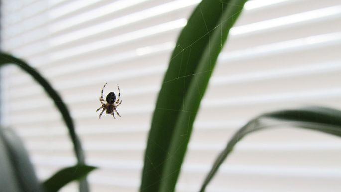 spider-invasion