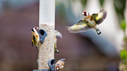 Best Spot for Bird Lovers This Weekend? Their Backyards