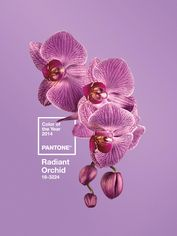 Pantone Unveils Its 2014 Color of the Year