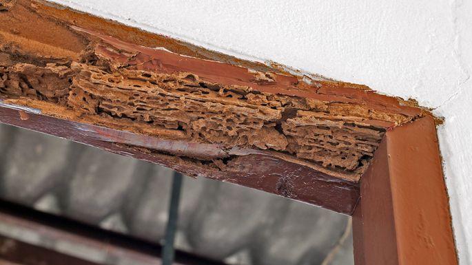 Does Homeowners Insurance Cover Termite Damage Realtor Com 174