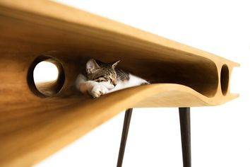 Meow Mix: 6 Classy Hangouts for Truly Cool Cats