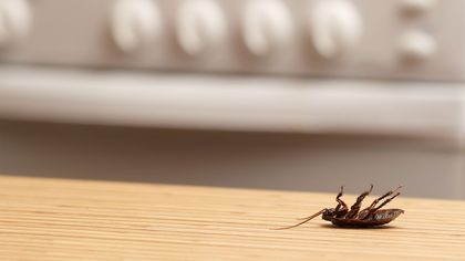 Best Way to Get Rid of Cockroaches, and Other Creepy-Crawly Facts