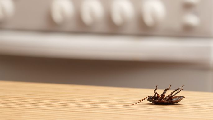 how to get rid of roaches in your house fast