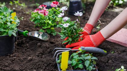 When to Plant Flowers: A Guide for All Seasons