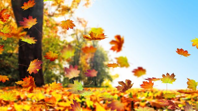 Leave Those Leaves Alone! Why You Might Not Want to Rake Your Lawn This Fall