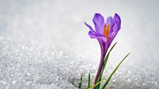As Prince Sang, 'Sometimes It Snows in April'—but We'll Recover