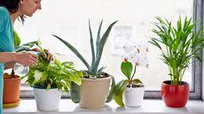 11 Hardy Houseplants You Can't Kill