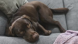 Will Fido Be Happy Here? How Much Pets Matter When Buying a Home