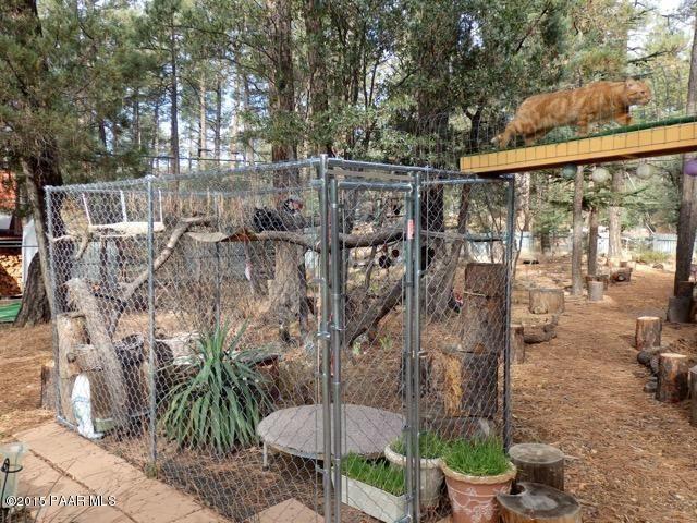 Adventurous cat enclosure