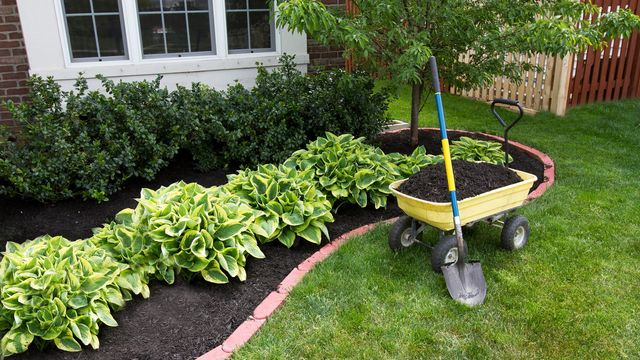 Spreading fresh mulch in garden