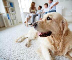 3 Tips for a Pet Owner When Purchasing a Home