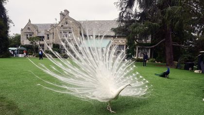 8 Things You Need to Know About the Playboy Mansion Before It's Gone