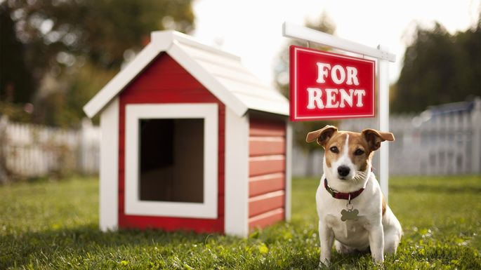 rent-dog-house