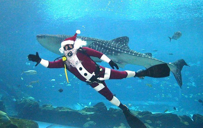 Scuba Santa at Georgia Aquarium: We're gonnaneed a bigger boat.