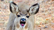 6 Cute Critters That Will Destroy Your Yard and Drive You Insane