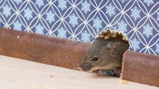 Keep Rodents and Pests Out of Your Home This Winter: A Room-by-Room Guide