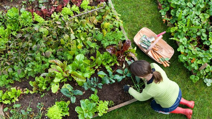 Source your own food with an edible garden.