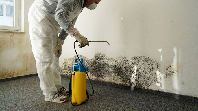 Image result for Mold Removal  istock